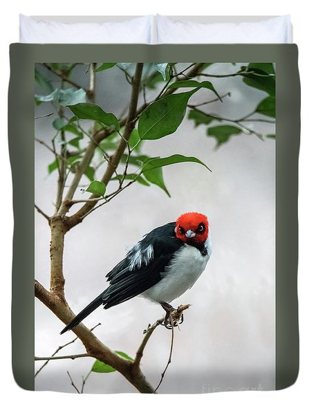 Red Capped Cardinal Duvet Cover