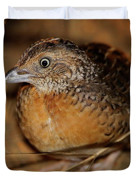 Red-chested Button-quail Duvet Cover