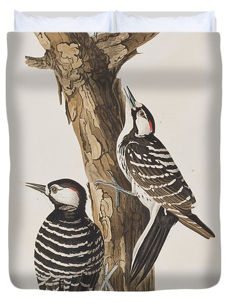 Red-cockaded Woodpecker Duvet Cover by John James Audubon