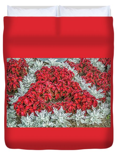 Duvet Cover featuring the photograph Red Coleus And Dusty Miller Plants by Sue Smith