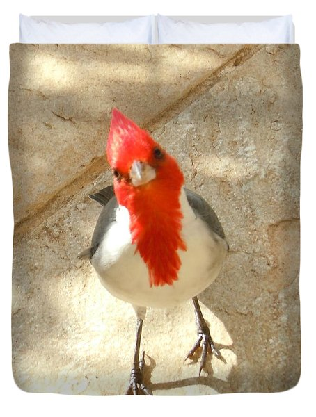 Red-crested Cardinal At My Feet Duvet Cover