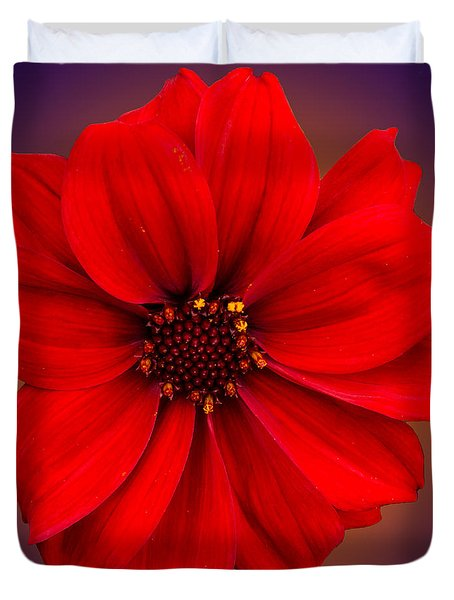 Duvet Cover featuring the photograph Red Dahlia-bishop-of-llandaff by Brian Roscorla