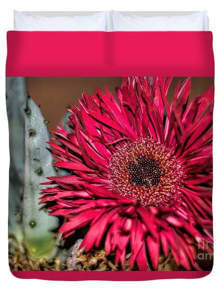 Duvet Cover featuring the photograph Red Daisy And The Cactus by Diana Mary Sharpton