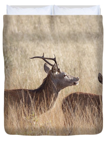 Red Deer Stag And Hind Duvet Cover