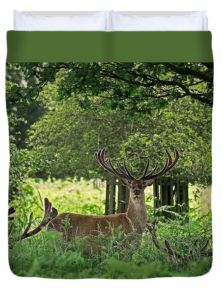 Red Deer Stag Duvet Cover by Rona Black