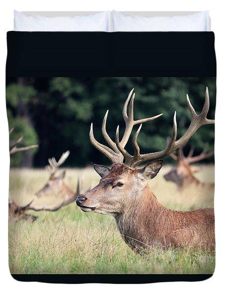 Red Deer Stags Richmond Park Duvet Cover