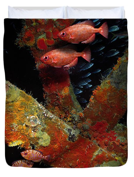 Red Fish On The Rhone Duvet Cover