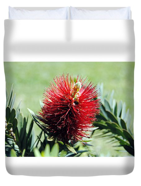 Callistemon - Bottle Brush 7 Duvet Cover