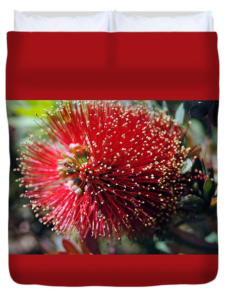 Callistemon - Bottle Brush 5 Duvet Cover
