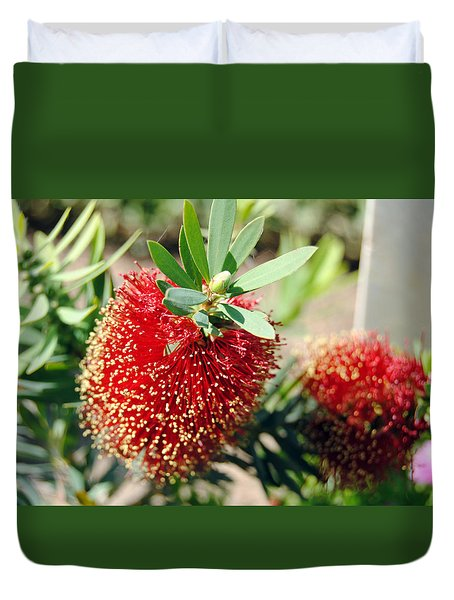 Callistemon - Bottle Brush 4 Duvet Cover