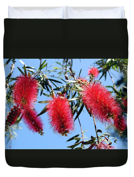 Callistemon - Bottle Brush 3 Duvet Cover