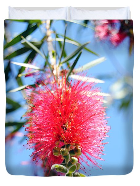 Callistemon - Bottle Brush 1 Duvet Cover