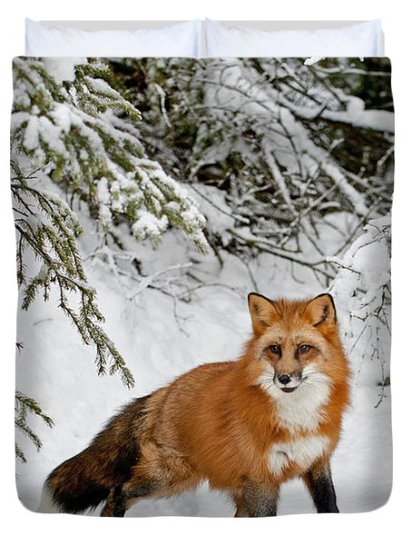 Red Fox In Winter Duvet Cover