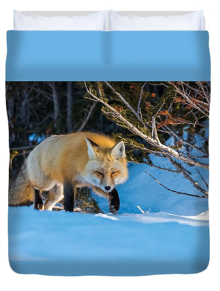 Duvet Cover featuring the photograph Red Fox In Winter Snow by Yeates Photography