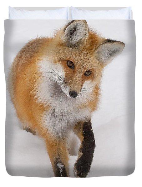 Red Fox Portrait Duvet Cover