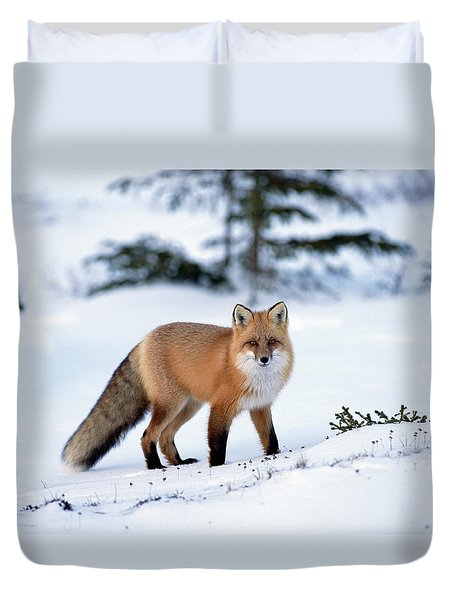 Duvet Cover featuring the photograph Red Fox Vulpes Vulpes Portrait by Konrad Wothe