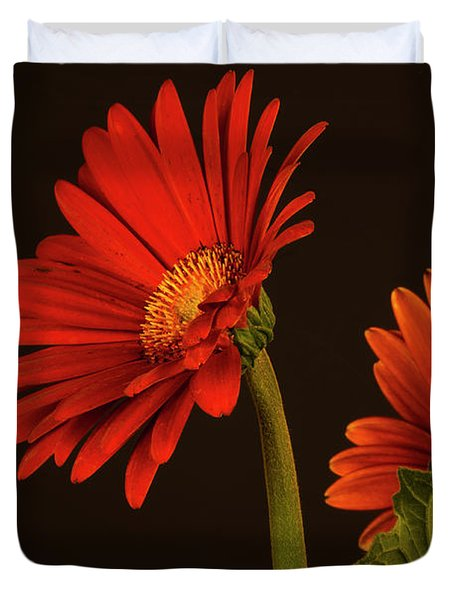 Duvet Cover featuring the photograph Red Gerbera Daisy 1 by Richard Rizzo