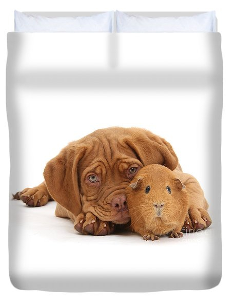 Red Guinea Pig And Dogue De Bordeaux Duvet Cover
