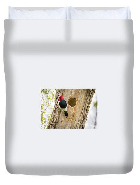 Red-headed Woodpecker At Home Duvet Cover