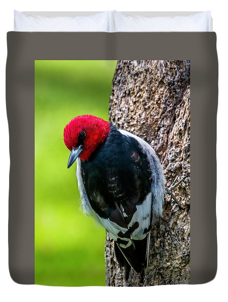 Red-headed Woodpecker Duvet Cover