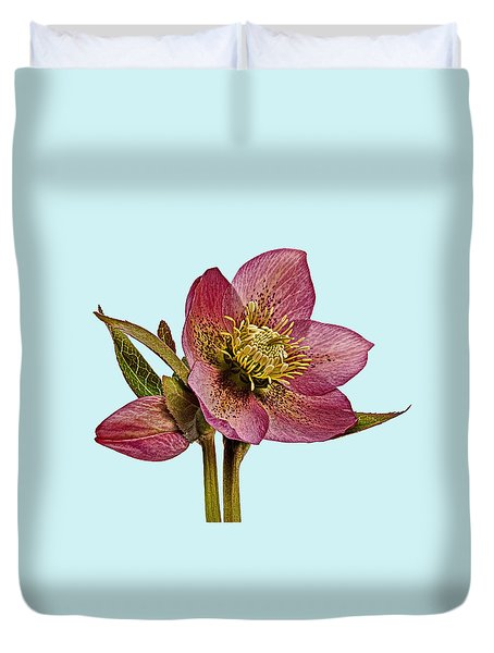 Duvet Cover featuring the photograph Red Hellebore Blue Background by Paul Gulliver