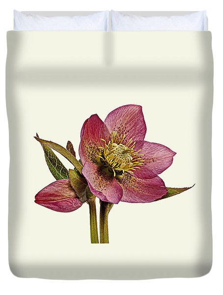 Duvet Cover featuring the photograph Red Hellebore Cream Background by Paul Gulliver