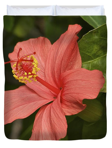 Red Hibiscus Duvet Cover by Michael Peychich