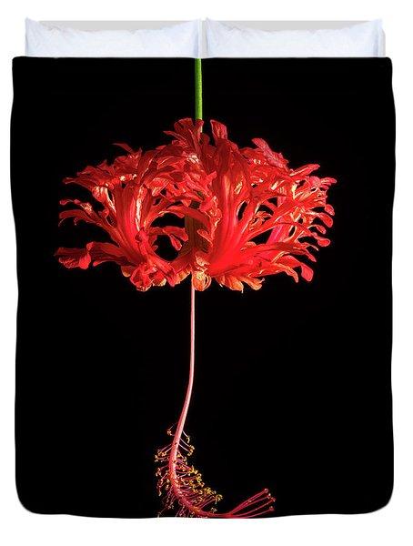 Red Hibiscus Schizopetalus On Black Duvet Cover