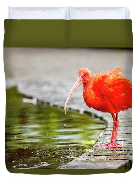 Duvet Cover featuring the photograph Red Ibis by Alexey Stiop