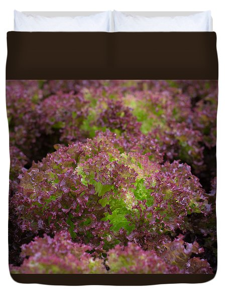 Duvet Cover featuring the photograph Red Lettuce by Hans Engbers