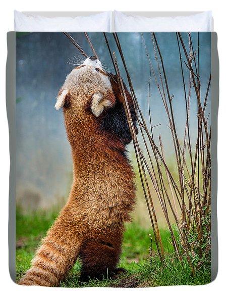 Red Panda As Biped Duvet Cover