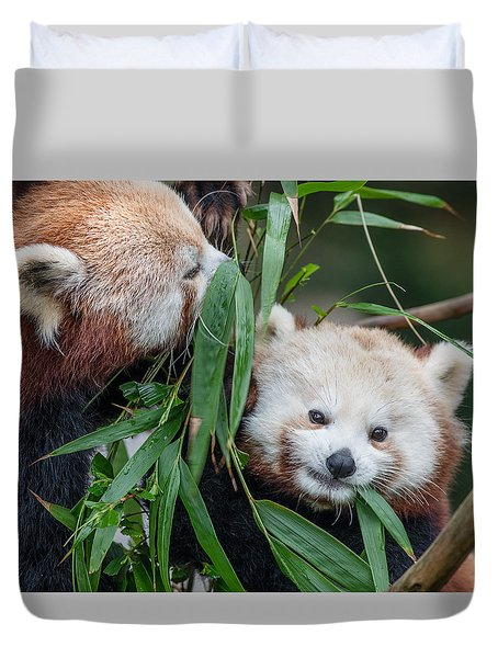 Red Panda Gossip Duvet Cover