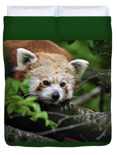 Red Panda Duvet Cover
