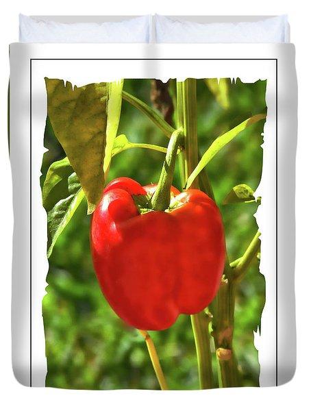 Red Pepper On The Vine Duvet Cover