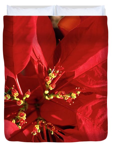 Red Poinsettia Macro Duvet Cover by Sally Weigand