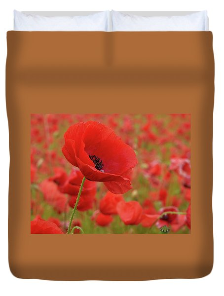 Red Poppies 3 Duvet Cover