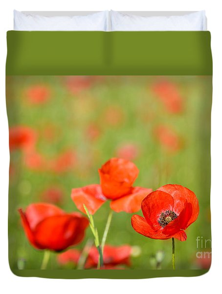 Red Poppy In A Field Of Poppies Duvet Cover by IPics Photography