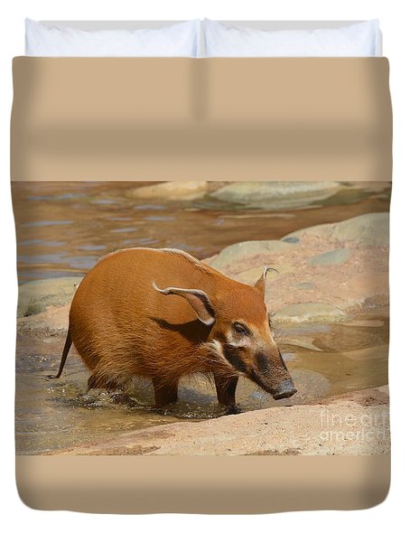 Red River Hog  Duvet Cover