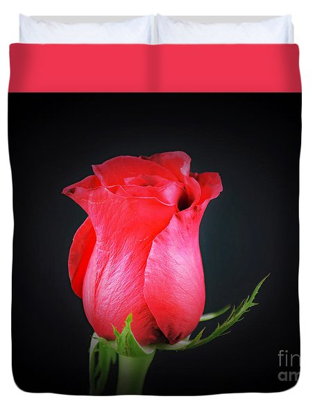 Red Rose Shows Love  Duvet Cover by Ray Shrewsberry