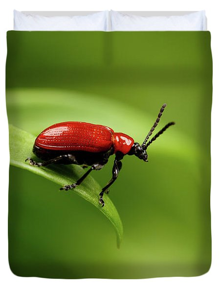 Red Scarlet Lily Beetle On Plant Duvet Cover