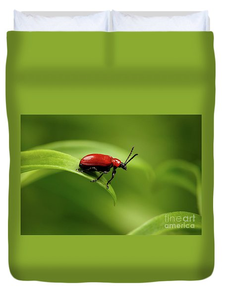 Red Scarlet Lily Beetle On Plant Duvet Cover by Sergey Taran