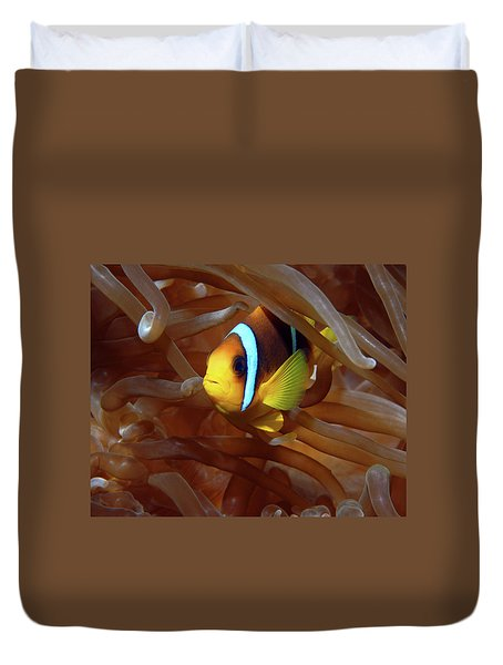 Red Sea Clownfish, Eilat, Israel 8 Duvet Cover