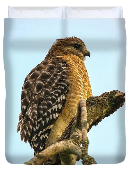 Red-shouldered Hawk - Buteo Lineatus Duvet Cover