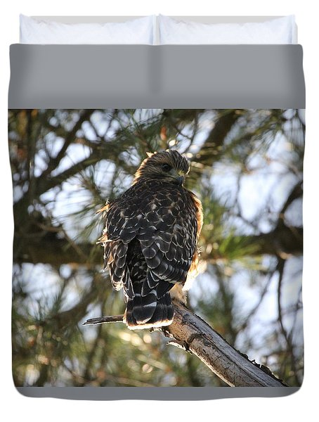 Red Shouldered Hawk Fledgling Duvet Cover