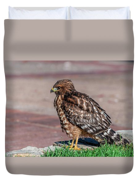 Red-shouldered Hawk Duvet Cover by Martina Thompson