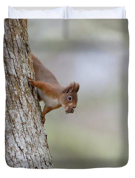 Red Squirrel Climbing Down A Tree Duvet Cover