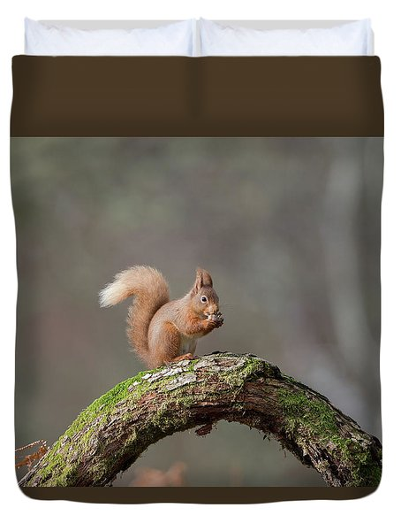 Red Squirrel Eating A Hazelnut Duvet Cover