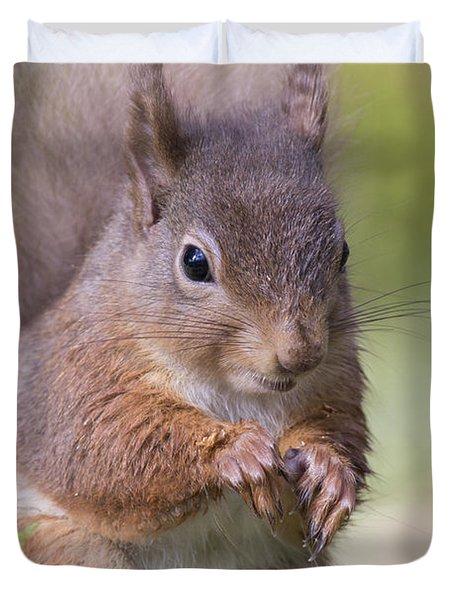 Red Squirrel - Scottish Highlands #1 Duvet Cover
