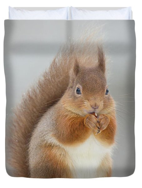 Red Squirrel Nibbling A Hazelnut In The Snow Duvet Cover