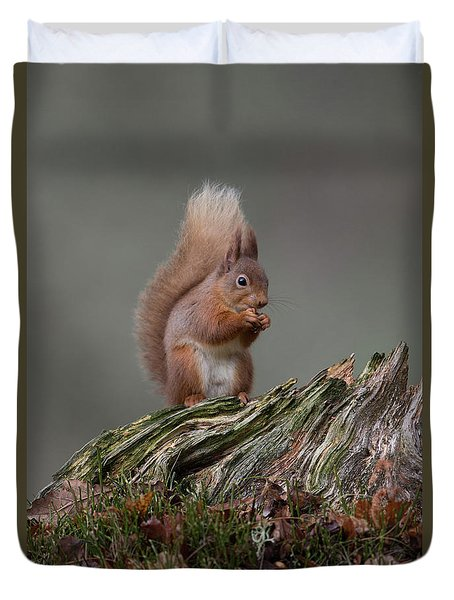 Red Squirrel Nibbling A Nut Duvet Cover